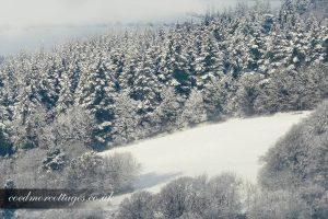 Snowy Pines Ceredigion