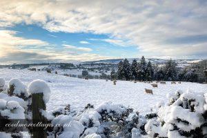 snowscape in carmarthenshire