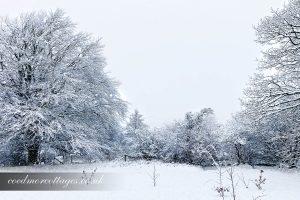 snowy meadow scene
