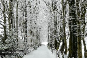 snowy tree tunnel